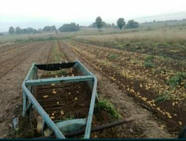 Ziemniaki z własnego gospodarstwa