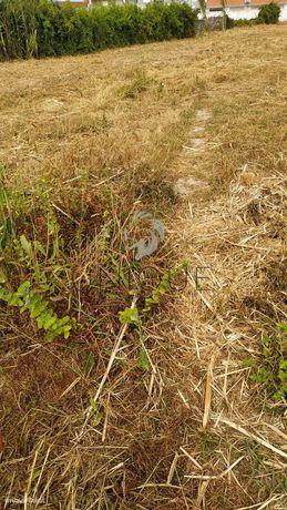 Terreno Rústico  Venda em Ílhavo (São Salvador),Ílhavo
