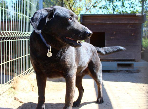 Kasia - w typie Labrador; łagodna i spragniona kontaktu z człowiekiem