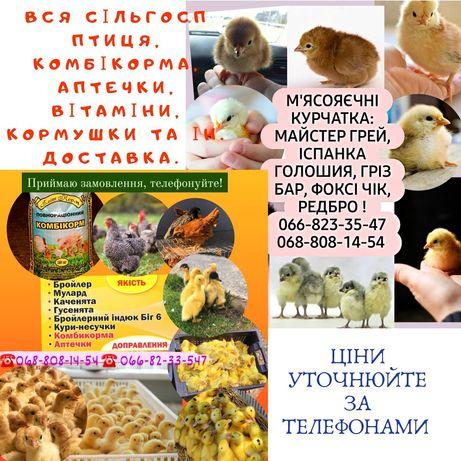 Бройлер Венгрия Мулард Индюшата Биг6 Утята Гуси цыплята куры Доминант