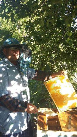Продаются пчёлы - карпатской породы, украинская степная.