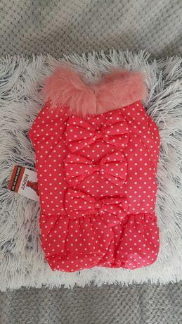 Piekna kurtka dla psa pieska kokardki  sukienka kurteczka ubranko