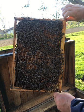 Продаються бджоли, рамка дадан (пчёлы, карпатка) дадановская рамка