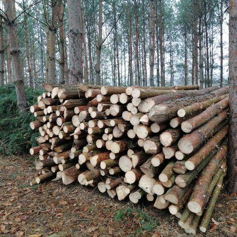 Sprzedam drewno na stemple, sosna
