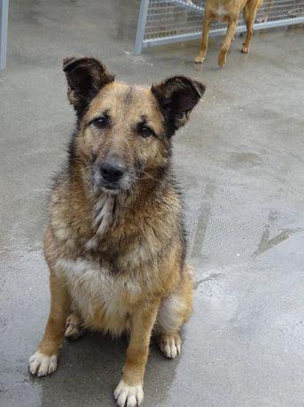Rapusinha - cadela esterilizada