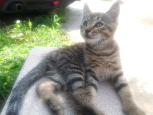 Кот мышелов ищет дом, котенок в добрые руки, котик на дачу, в село