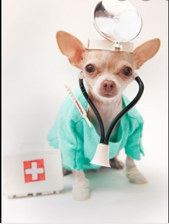 Ветеринар.Херсон.