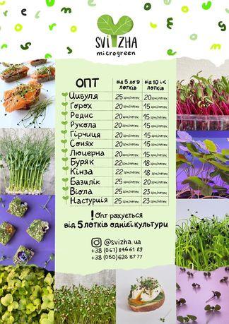 ОПТ Микрогрин, microgreen, микрозелень ОПТ