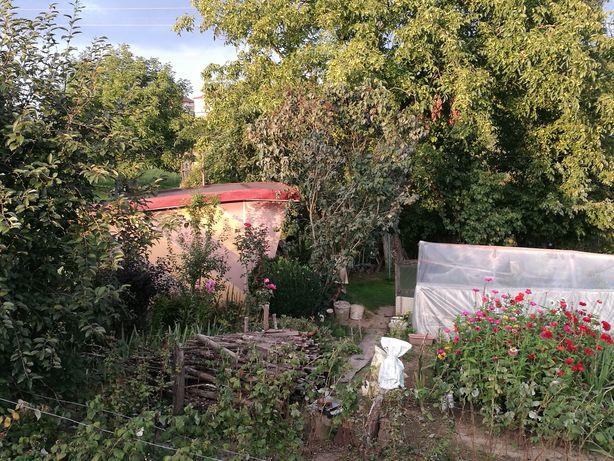 Ogródek działkowy na ROD Olszynka w Kazimierzy Wielkiej