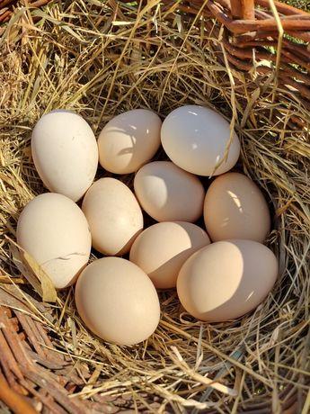 Jaja konsumpcyjne