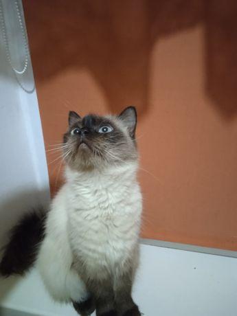 Кошечка Муся, ждёт тебя!