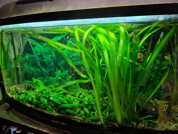 OKAZJA Akwarium 98 litrowe z filtrem zewnętrznym