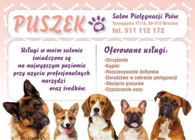 psi fryzjer, strzyżenie psów,usługi groomerskie, fryzier dla zwierząt