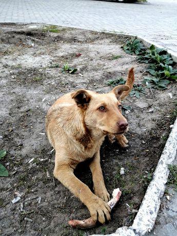 Собака Джесси, щенок в хорошие руки