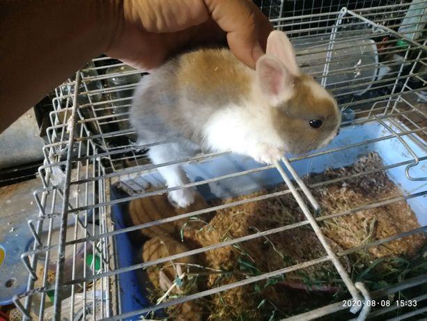 Крольчата белоухие супер миники
