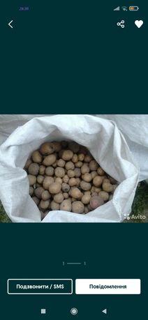 Продається картопля дрібна