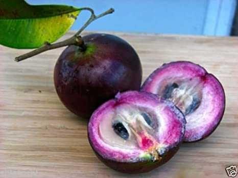 5 sementes de cainito
