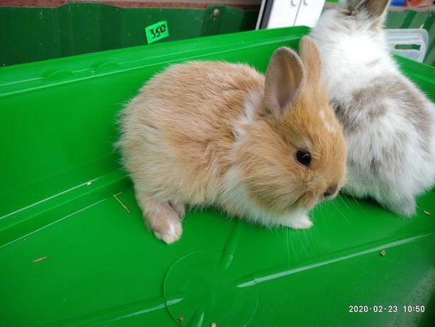 Крольчата торчеушки и вислоушки