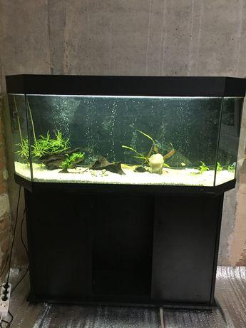 аквариум juwel 240л со всем-всем! +полностью новой крышкой/светом