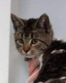 Koteczka do adopcji ( została adoptowana)