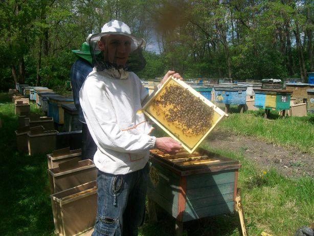Продам пчелопакеты карпатской породы пчел на весну 2022 года