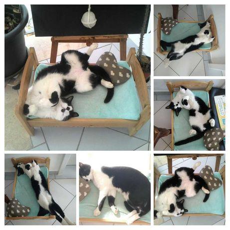 Gato castrado para adopção