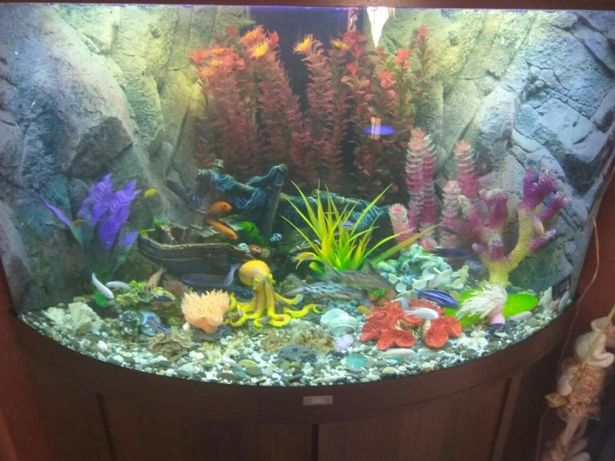 Обслуживание аквариумов! Оформление! Продажа!