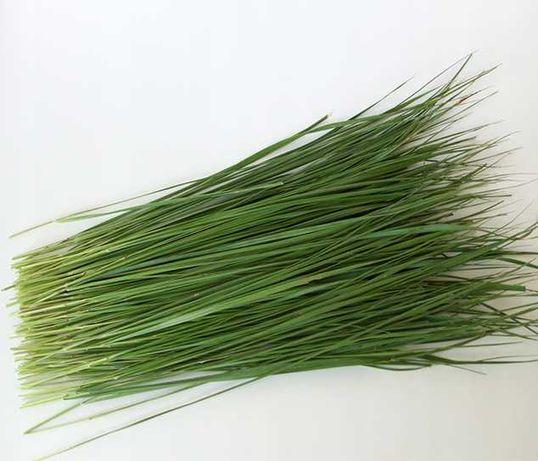 Зубровка трава (сувенирная)