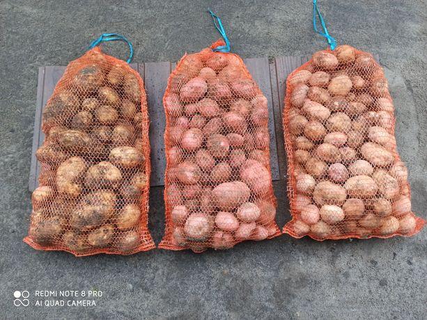 Ziemniaki Vineta, Ricarda, Irga, Denar, Lily