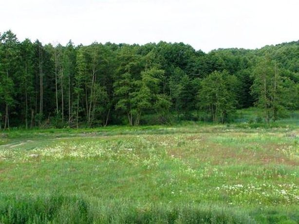 Земельна ділянка 12 соток біля Брюховицького лісу!!!