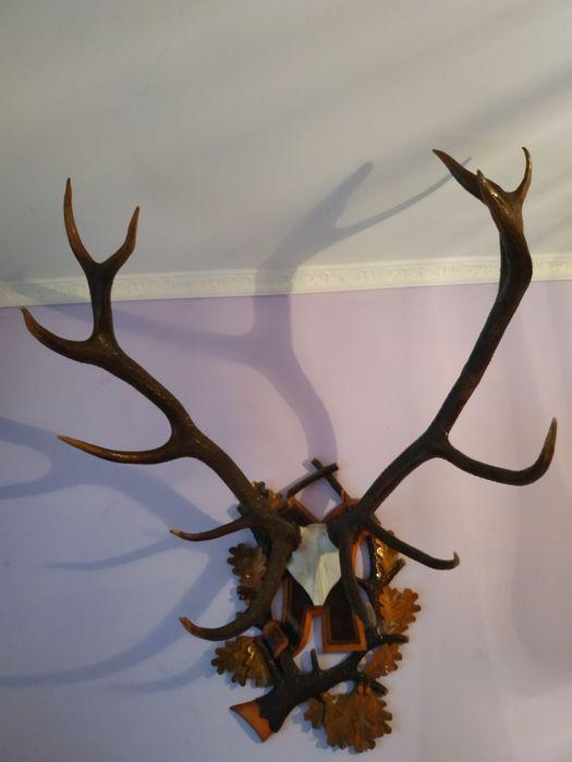Роги оленя карпатського Хмельницкий - изображение 1