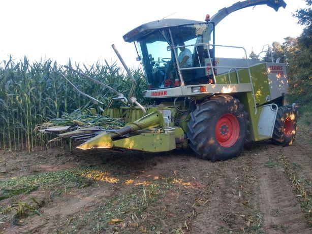 Koszenie kukurydzy na kiszonkę