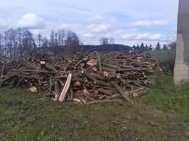 drewno opałowe w metrach  lisciaste  lub pociete drzewo opał