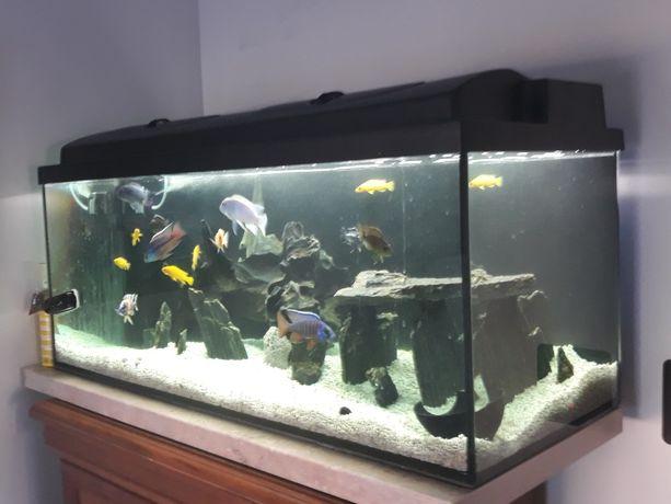 Akwarium z rybkami i osprzętem.