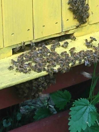 sprzedam pszczoły i ule