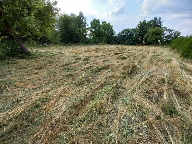 Siano sianokiszonka trawa oddam za darmo prosto z pokosu z pola 0,15ha