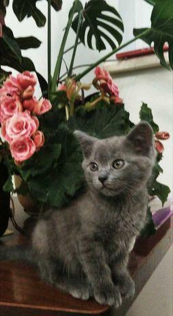 Сіре кошеня чекає на господаря!