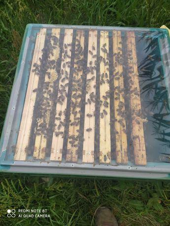 Pszczoły, odkłady pszczele
