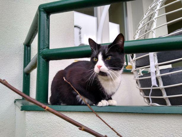 Czarny Kot Gdańsk Niedźwiednik