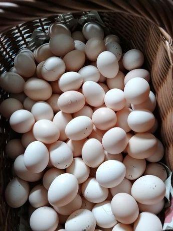 Swojskie jajka z własnego chowu 0,70gr - 1zł