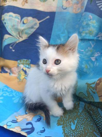 Отдам котёнка-девочку Ляну