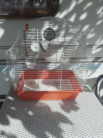 Klatka do papugi z wyposażeniem 40 x 25 x wysoka 50 cm.