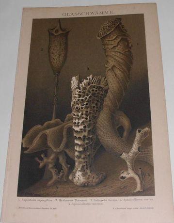 ALGI, RAFY, WODA, MORZE oryginalne XIX w. grafiki do wystroju wnętrza