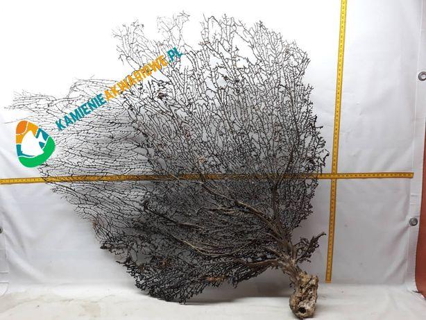 Koralowiec Gorgonia Super dekoracja do AKWARIUM wysyłka KURIER