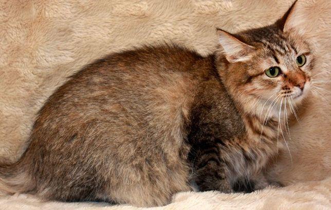 Кошечка Мейси ищет свою семью, стерилизована, 1 год(кошка,кот)