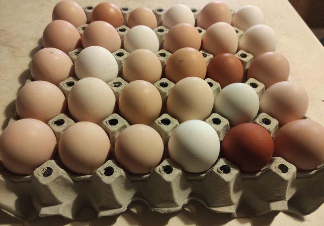 Jajka wiejskie ekologiczne, bez chemii i GMO od kur z wolnego wybiegu
