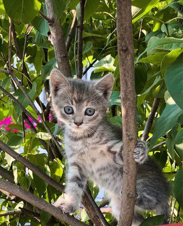 Кошенята шукають чуйних господарів (Хмельницька область)