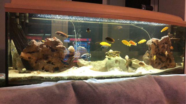 Akwarium z całym wyposażeniem ok 340L wymiary 150x50x50