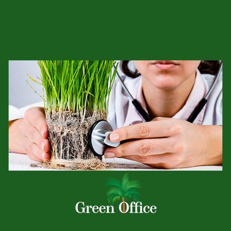 Уход за офисными растениями. Услуги флориста.