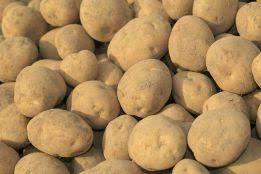 Ziemniaki, sadzeniaki